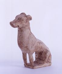 63.白陶狗